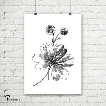Het Noteboompje poster zwart wit zwartwit zwart-wit zwart/wit botanicals planten urban jungle bloemen pentekening schets