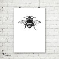 Het Noteboompje poster zwart wit zwartwit zwart-wit zwart/wit insecten insect hommel pentekening schets