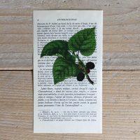 bramenblad braam bramen herfst print franse frans vintage oud pagina bladzijde poster Het Noteboompje
