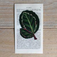 tropische bladeren tropen blad print franse frans vintage oud pagina bladzijde poster Het Noteboompje