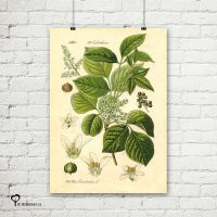 vintage poster 20 x 30 cm oud reproductie botanical botanicals posters het noteboompje gifsumak