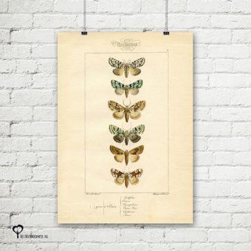 vintage poster 20 x 30 cm oud reproductie botanical botanicals posters het noteboompje vlinder vlinders nachtvlinder nachtvlinders