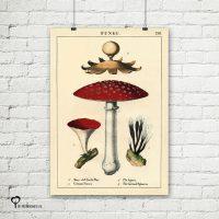 vintage poster 20 x 30 cm oud reproductie botanical botanicals posters het noteboompje paddestoel fungi paddestoelen