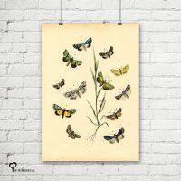 vintage poster 20 x 30 cm oud reproductie botanical botanicals posters het noteboompje vlinder vlinders nachtvlinder nachtvlinders mot motten