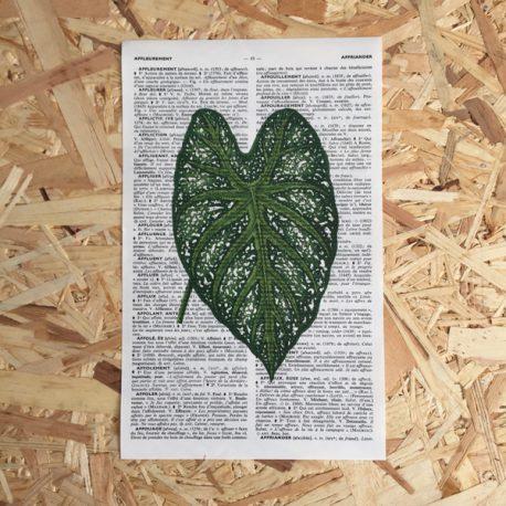 acacia blad acaciablad print franse frans vintage oud pagina bladzijde poster Het Noteboompje botanische print botanical