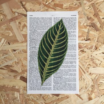 blad franse frans vintage oud pagina bladzijde poster Het Noteboompje botanische print botanical