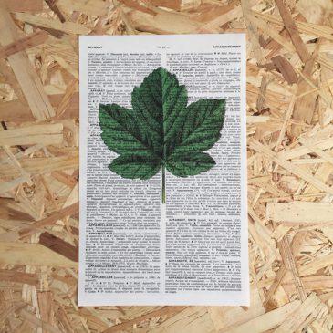 esdoornblad esdoorn blad print franse frans vintage oud pagina bladzijde poster Het Noteboompje botanische print botanical