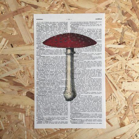 paddestoel rood met witte stippen paddestoelen herfst print franse frans vintage oud pagina bladzijde poster Het Noteboompje