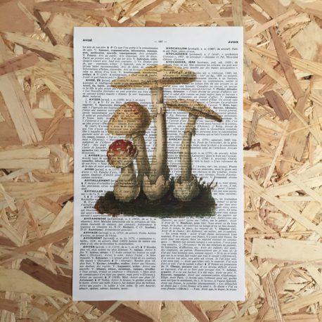 paddestoel paddestoelen herfst print franse frans vintage oud pagina bladzijde poster Het Noteboompje