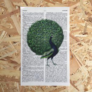 pauw veer pauwenveer print franse frans vintage oud pagina bladzijde poster Het Noteboompje