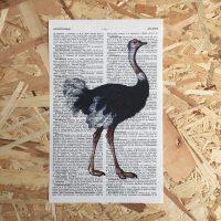 struisvogel print franse frans vintage oud pagina bladzijde poster Het Noteboompje