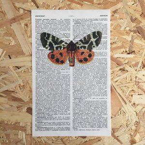 vlinder mot print franse frans vintage oud pagina bladzijde poster Het Noteboompje