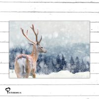Het Noteboompje kerstkaart christmas christmascard x-mas xmas card spar kerstboom denneboom christmastree tree xmastree sneeuw snow winter kerst boom hert ree deer moose