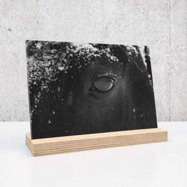paard op plexiglas print op plexiglas foto op glas print op acrylaat acrylaatprint, foto op acryl acrylfoto foto op glas, glasfoto foto op plexiglas foto op kunststof foto op plastic acrylprint glasprint plexiglasprinthet noteboompje
