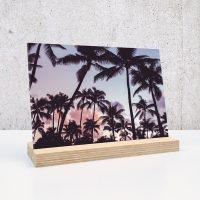 palm palmbomen op plexiglas print op plexiglas foto op glas print op acrylaat acrylaatprint, foto op acryl acrylfoto foto op glas, glasfoto foto op plexiglas foto op kunststof foto op plastic acrylprint glasprint plexiglasprinthet noteboompje