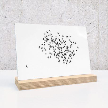zwerm vogels vogel vogelvlucht op plexiglas print op plexiglas foto op glas print op acrylaat acrylaatprint, foto op acryl acrylfoto foto op glas, glasfoto foto op plexiglas foto op kunststof foto op plastic acrylprint glasprint plexiglasprinthet noteboompje
