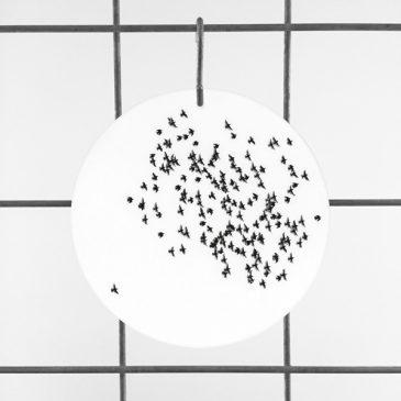 zwerm vogels op plexiglas plexiglashanger print op plexiglas foto op glas print op acrylaat acrylaatprint, foto op acryl acrylfoto foto op glas, glasfoto foto op plexiglas foto op kunststof foto op plastic acrylprint glasprint plexiglasprinthet noteboompje