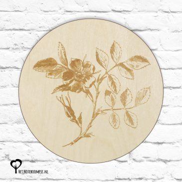 wilde roos rozen bloem bloempje bloemetje plant planten botanical het noteboompje muurcirkel muurcirkels wandcirkel wandcirkels tuincirkel tuincirkels muur wand cirkel rond rondje afbeelding schilderij
