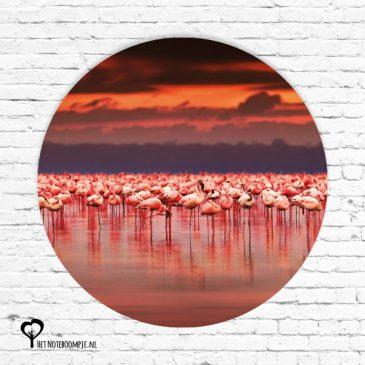 het noteboompje muurcirkel muurcirkels wandcirkel wandcirkels tuincirkel tuincirkels muur wand cirkel rond rondje afbeelding schilderij schutting poster tuin flamingo zalmroze flamingos flamingo's